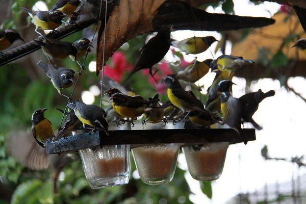 oiseaux-seminaire-resto-tendacayou-20090204_0323-compressor-1